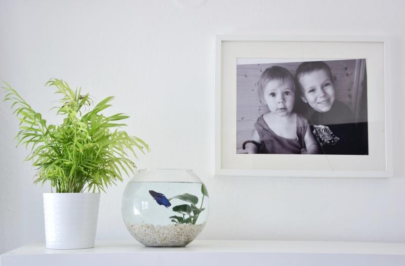 male-akvarium-pro-rybicky-rybka-beta-bojovnice-5