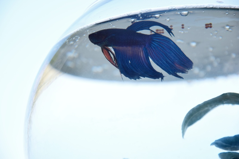 male-akvarium-pro-rybicky-rybka-beta-bojovnice-9